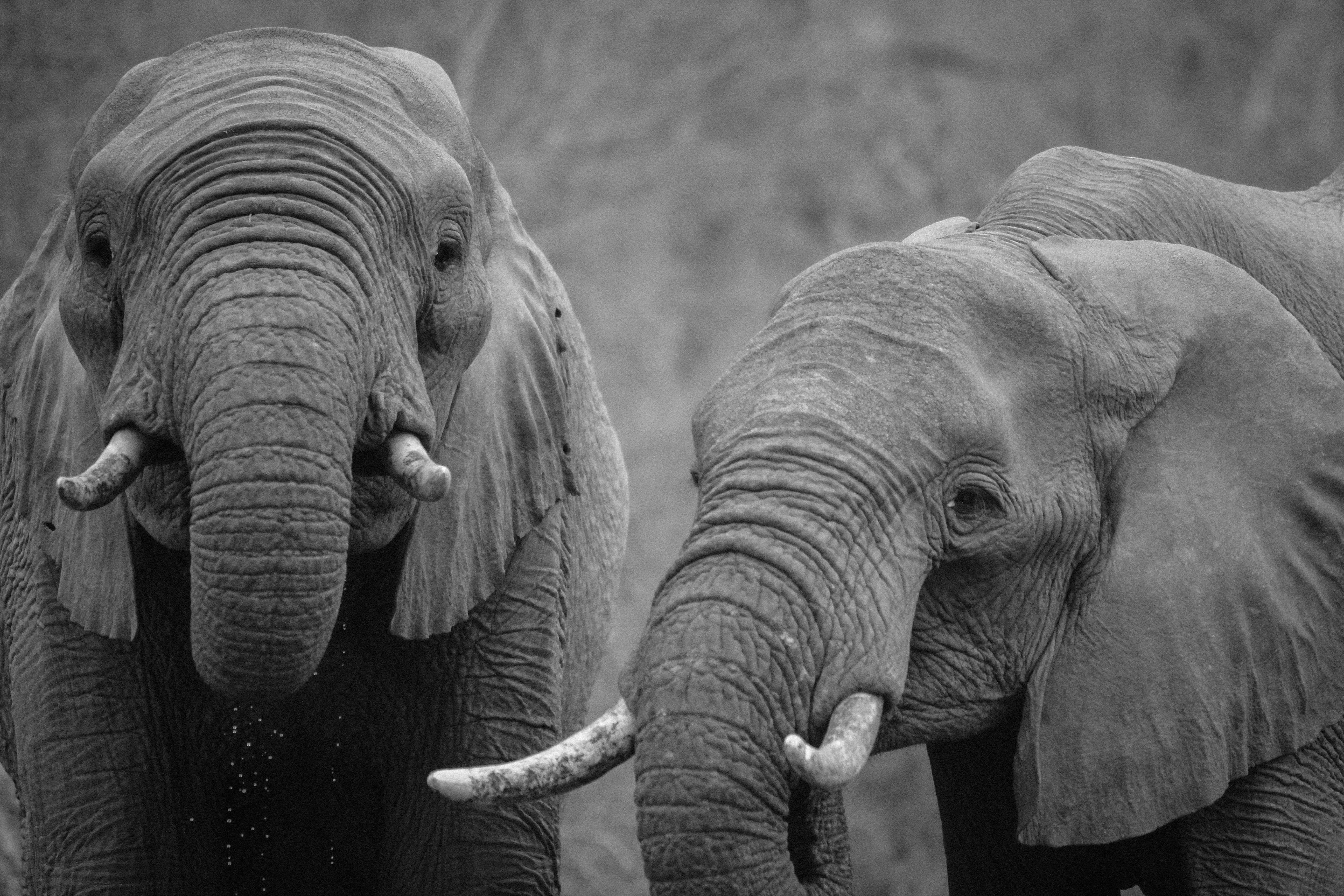 Is CITES Endangered?