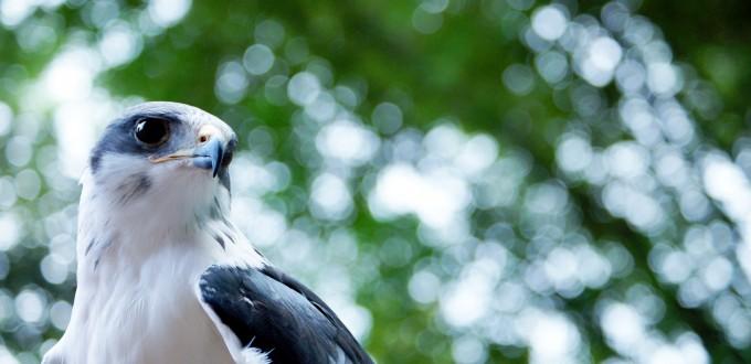 falcon-1314930