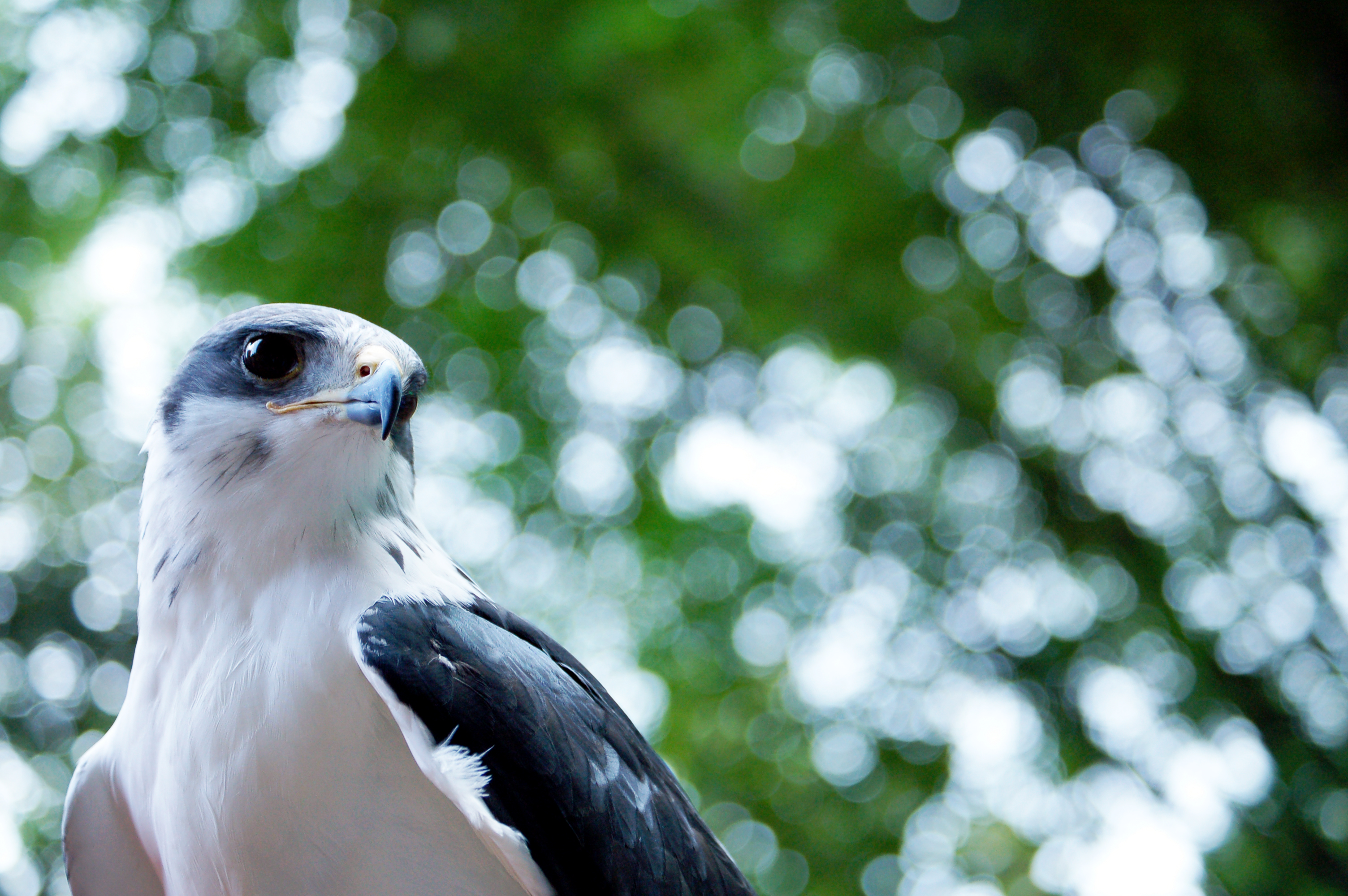Ethical Convergence and the Endangered Species Act