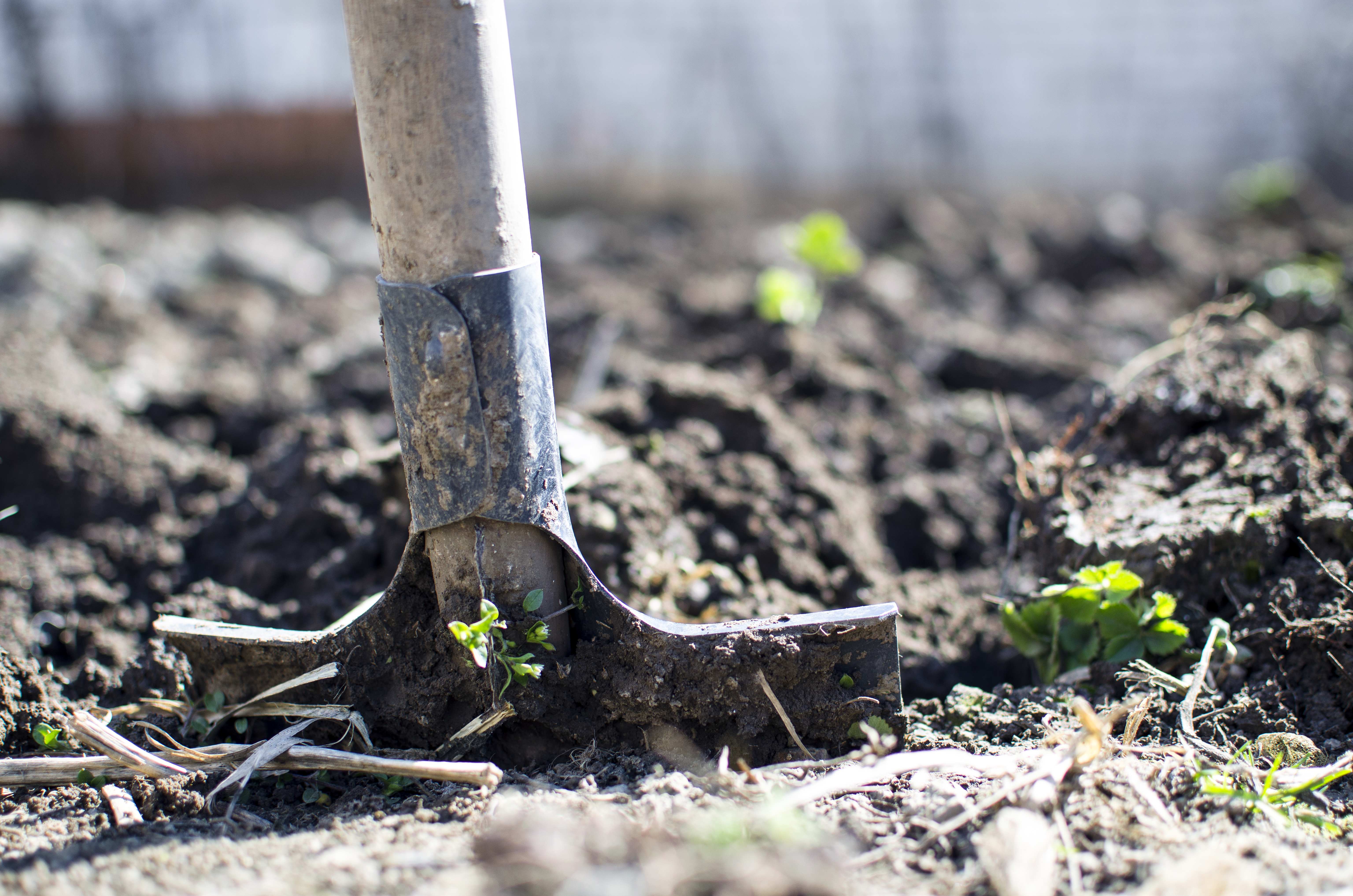 Soil Conservation in California: An analysis of the Healthy Soils Initiative